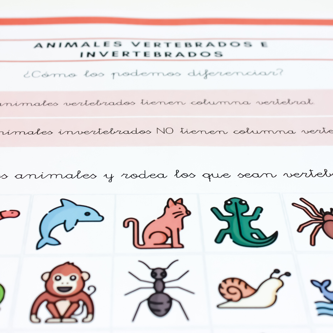 Animales Vertebrados E Invertebrados Kumubox Com